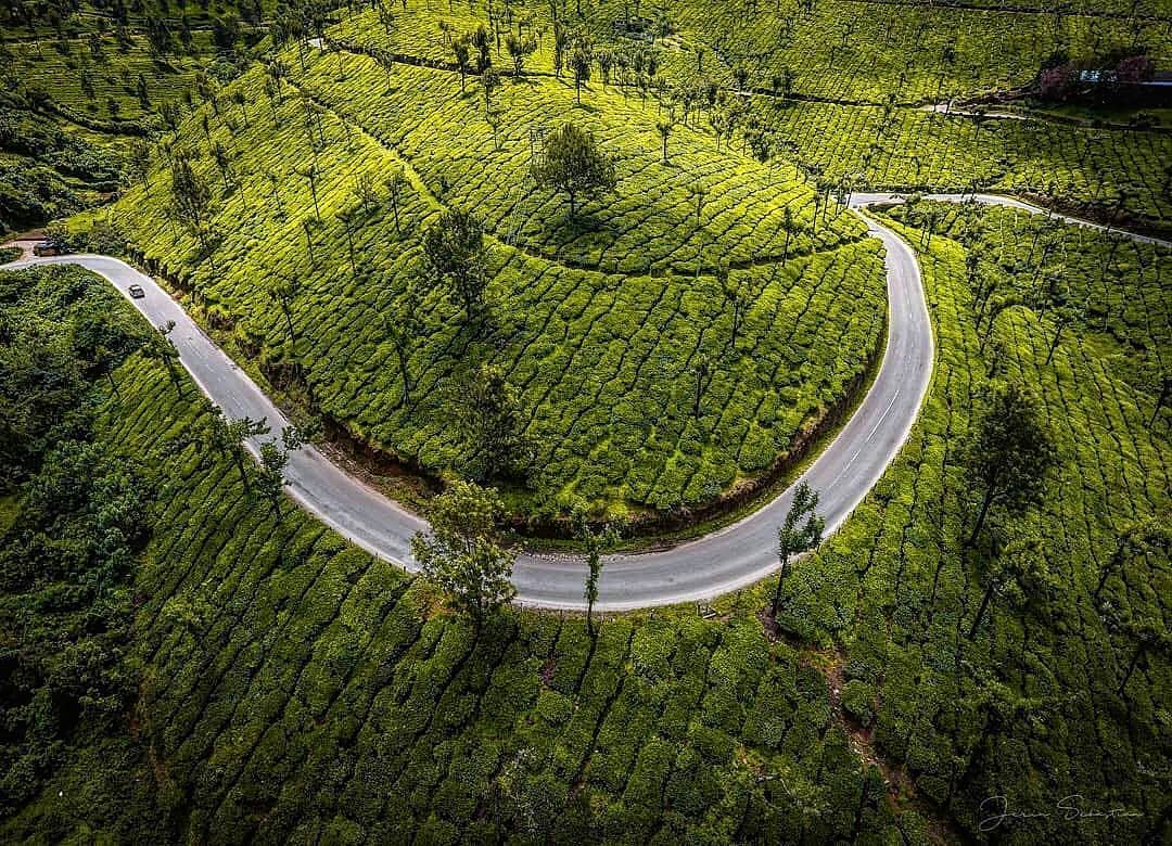 Featured Photograph. Munnar