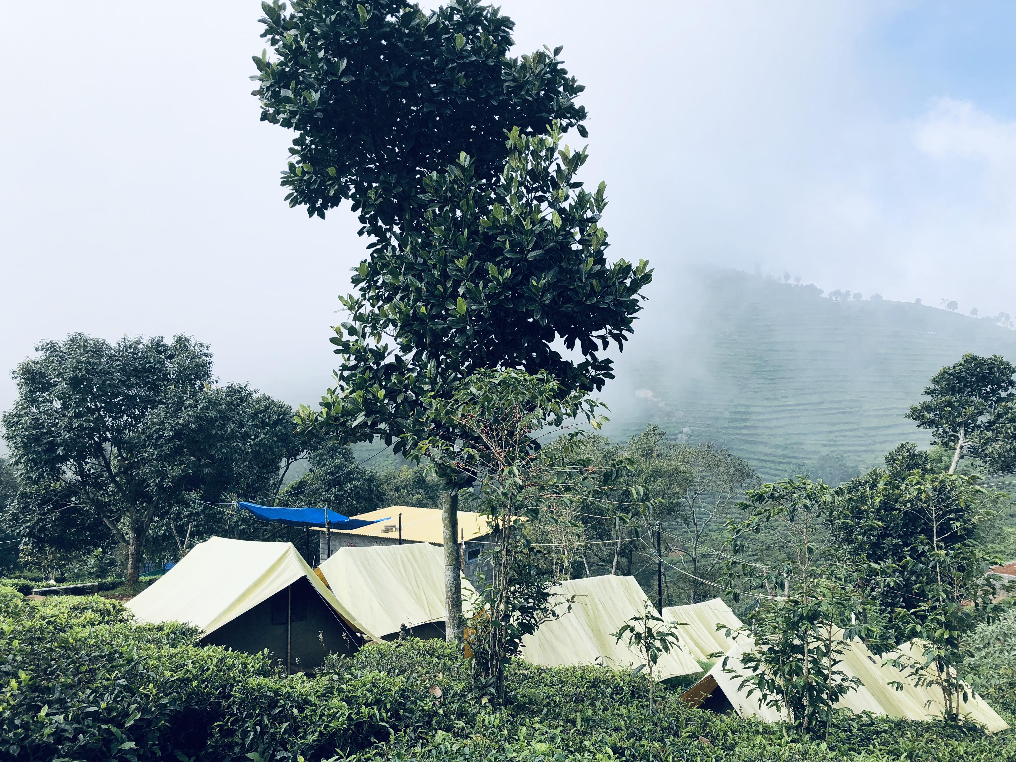 Plantation Camping at Ooty