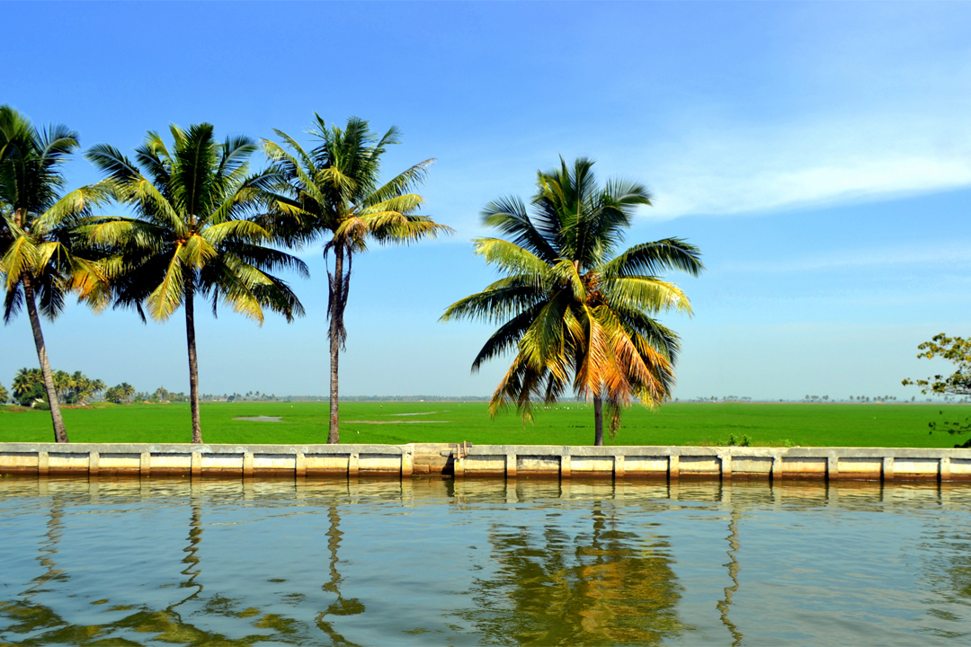 Kuttanad. The Best Places To Visit In Kerala