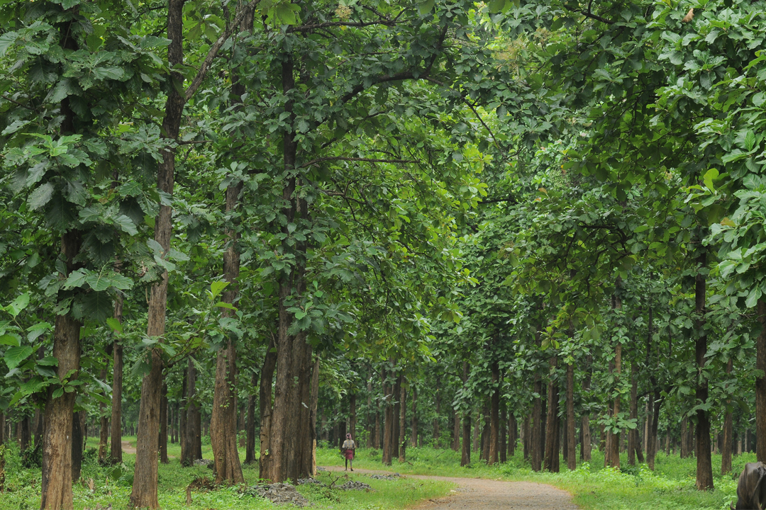 Malappuram. Nilambur Teak Plantation. The Best Places To Visit In Kerala