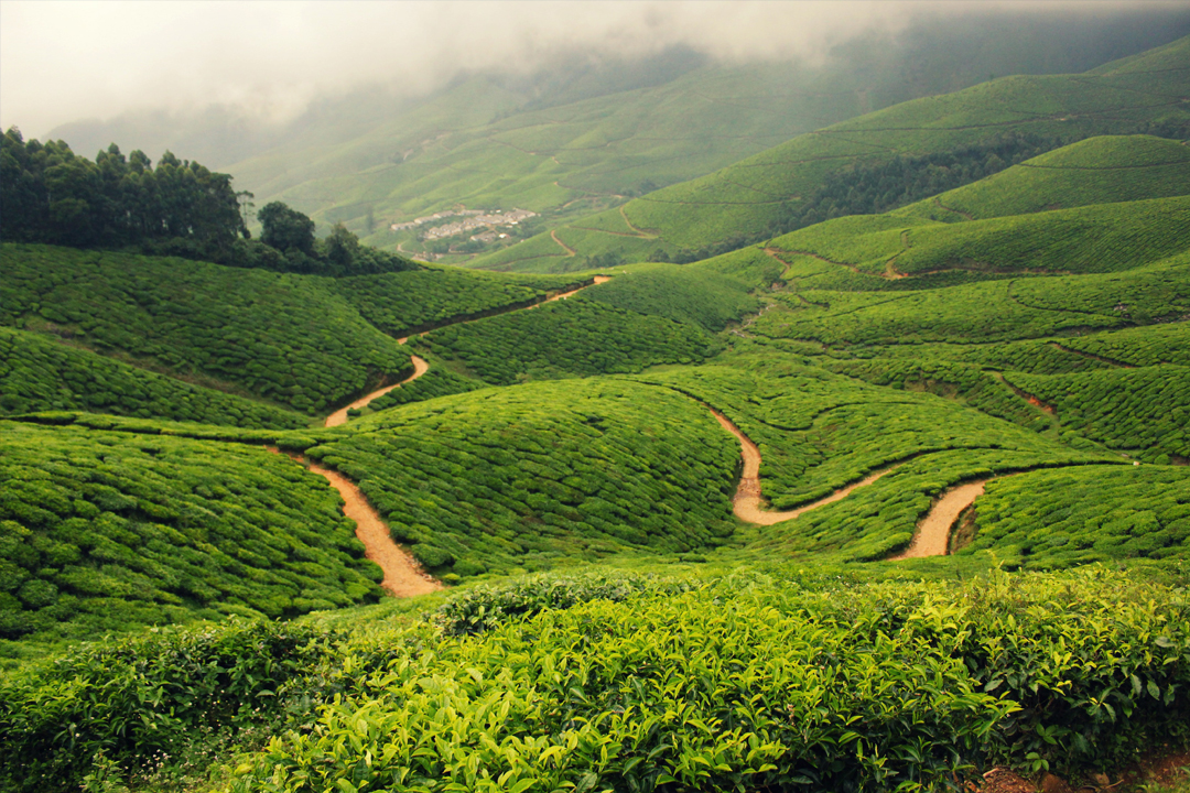 Munnar. The Best Places To Visit In Kerala