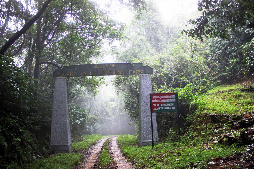 Palakkad. Silent Valley National Park. The Best Places To Visit In Kerala