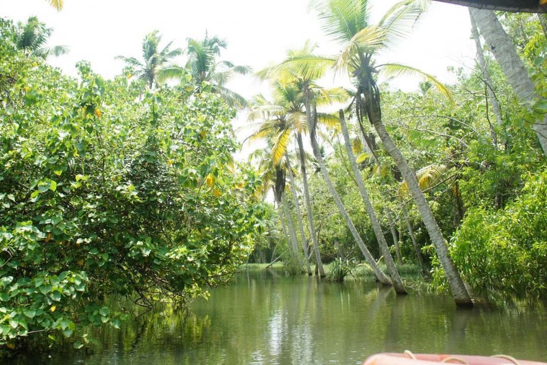 Poovar. The Best Places To Visit In Kerala