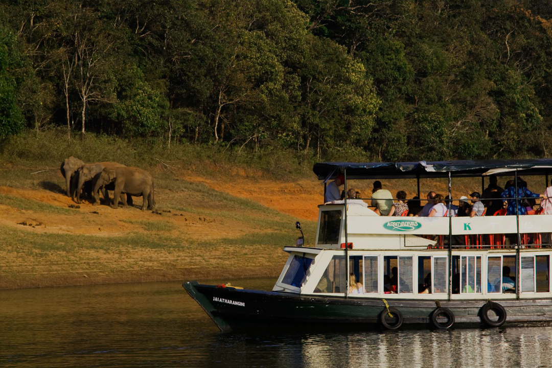 Thekkady. The Best Places In To Visit In Kerala