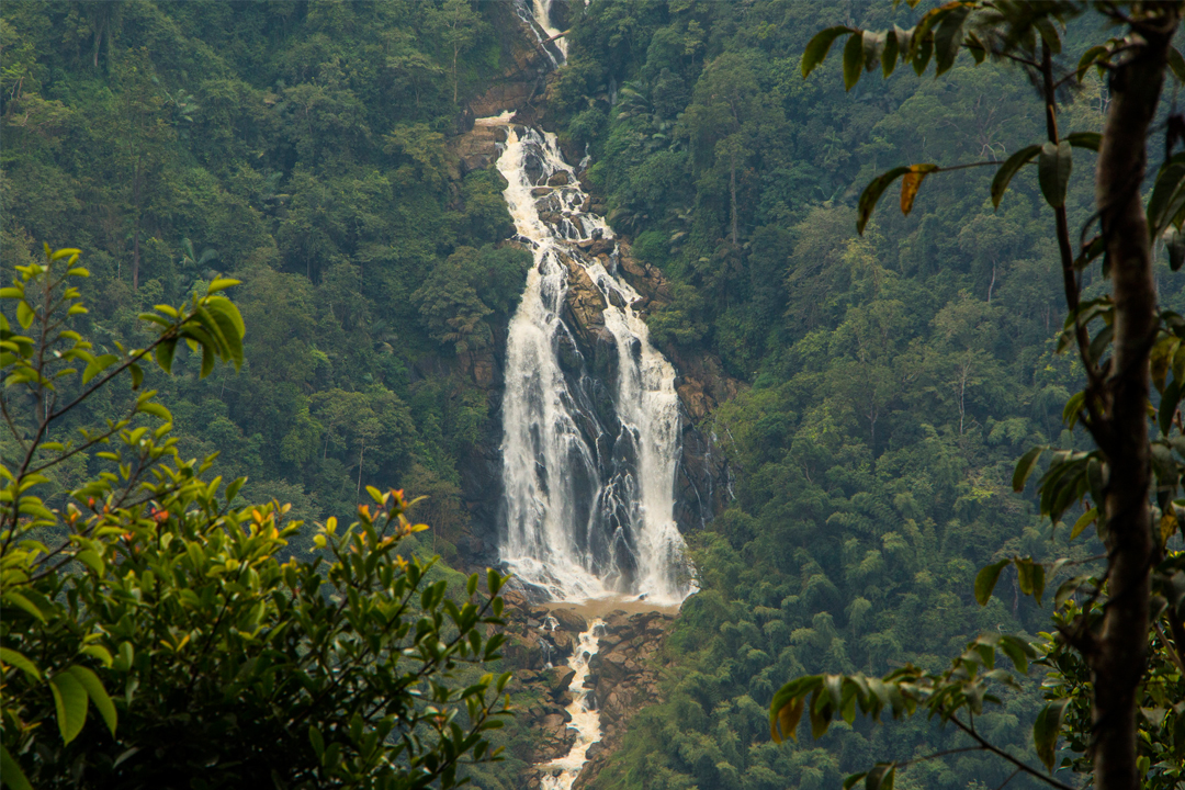 Wayanad. The Best Places To Visit In Kerala