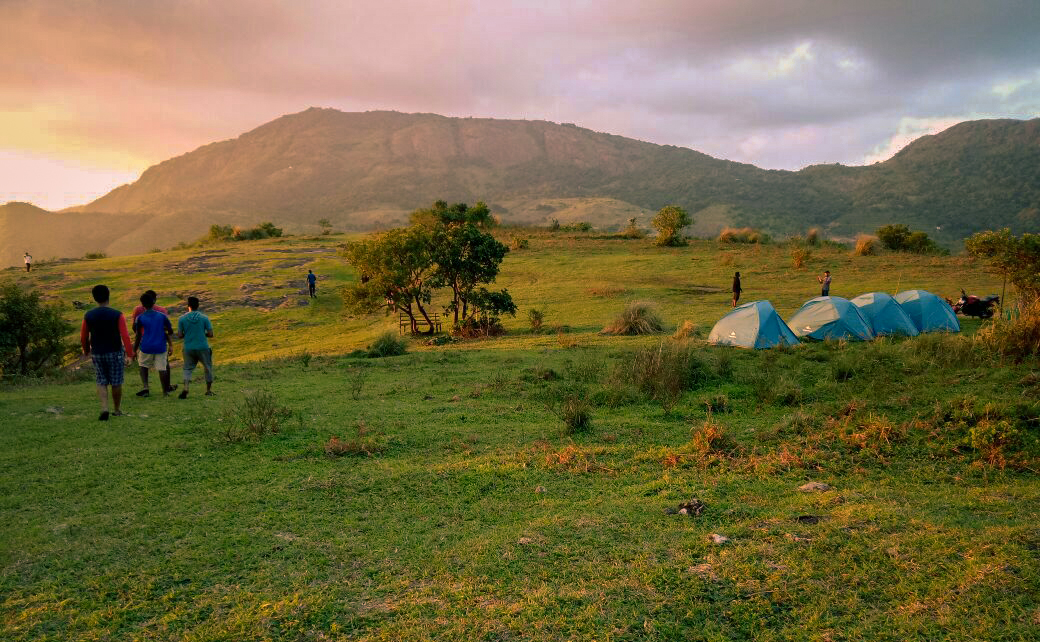 Explore the meadows. Thangalpara Top Camp