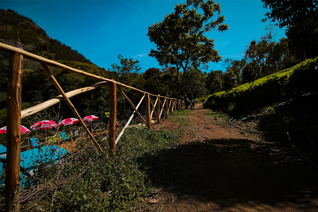 Pongal at Meeshapuli Base Camp at Munnar
