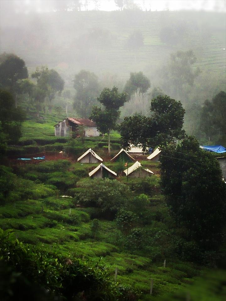 Plantation Camp Ooty
