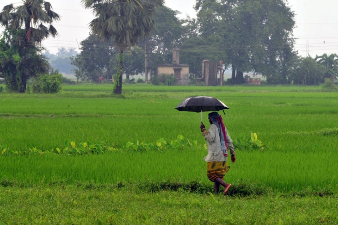 Kerala paddy fields